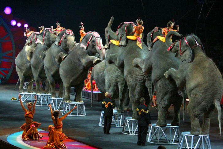 Foto18 Elefantes em Circo  New Jersey quer proibir elefantes em circos