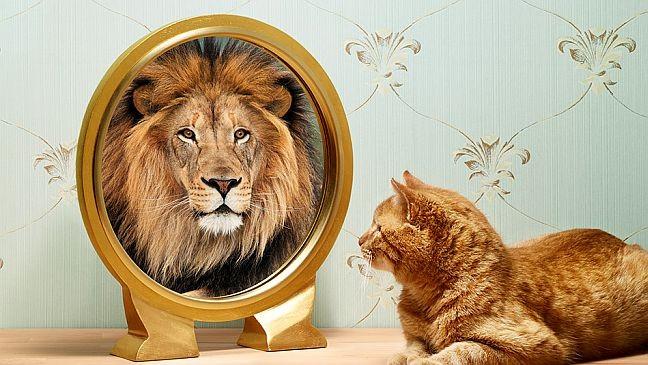 autoimagem Melhorando a Auto Imagem