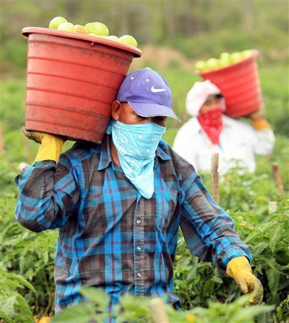 Foto17 Colhedores de tomates Câmara aprova proposta que permite indocumentados lutarem por direitos trabalhistas