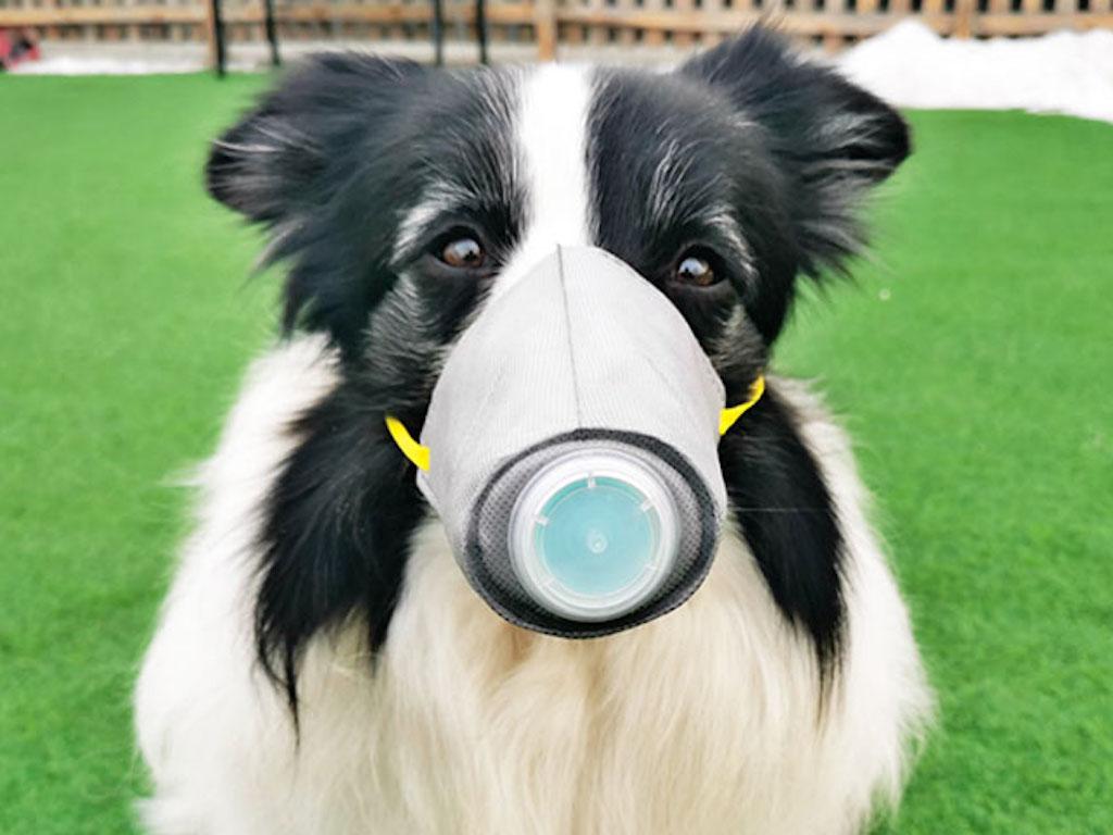 Foto32 Animais de estimacao e coronavirus Os cães pode contrair o coronavírus?