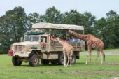 Six Flags Safari drive thru scaled 170x113 Home page