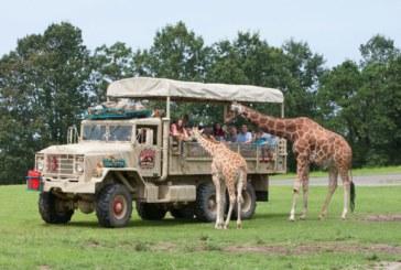 Six Flags Safari drive-thru abrirá ao público no sábado (30)