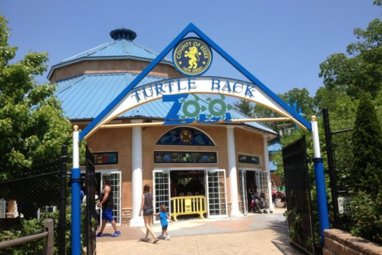 Turtle Back Zoo reabre ao público em New Jersey